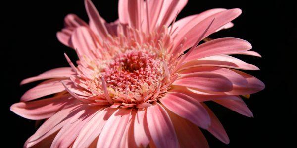 fiore sotto luce solare