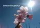 fiore sotto il sole con scritta www.mariacorda.it